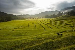 rizière par étapes