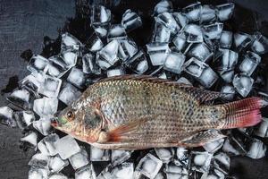 poisson frais sur glace photo