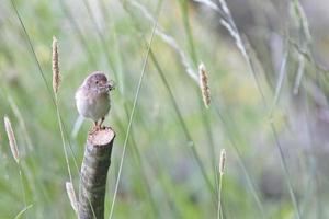 oiseau perché sur une branche photo