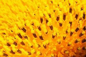 photo gros plan d'une fleur.