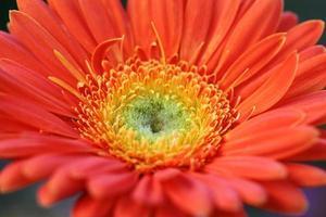 fleur dans les jardins photo