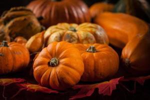 citrouilles pour Thanksgiving