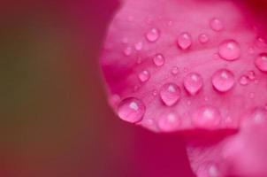pétale et gouttes de pluie