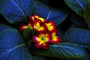 fleurs ornementales, usines de production de serre photo