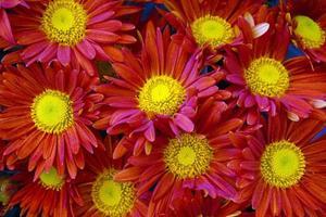 fleurs ornementales, usines de production de serre