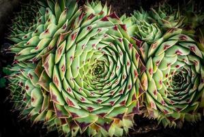 grappe de cactus pointus rouges photo