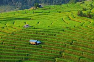 Champ de riz en terrasses vertes à ban pa bong peay