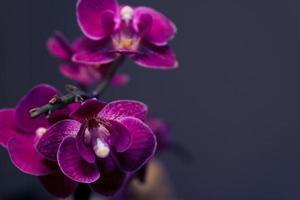fleurs d'orchidées violettes. photo