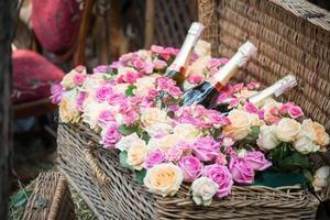 beauté des roses