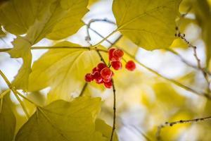 baies fanées en automne