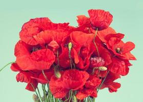 bouquet de fleurs de pavot rouge