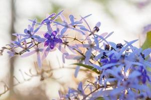 flore violette photo