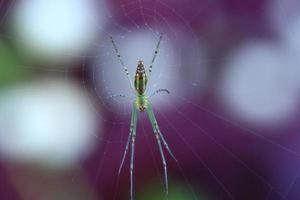 araignée de maison sur le web