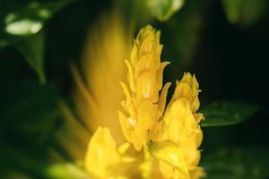 fleur dans le jardin photo