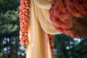 beauté des roses photo