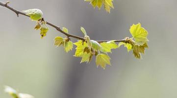 branches d'arbre photo