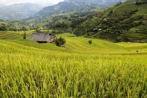 maison sur la terrasse de riz photo