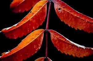 feuille d'automne sur fond noir 2