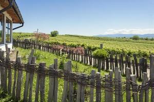 vignobles en face de la vieille maison photo