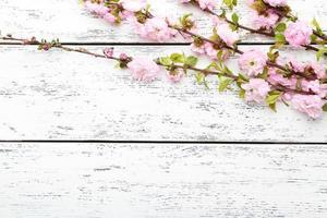 Branche fleurie de printemps sur fond de bois blanc