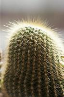 cactus,