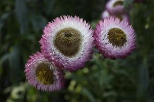 fleurs de papier photo
