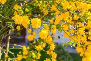fleurs jaunes sur les branches des arbres photo