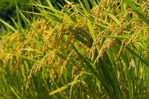 La saison des récoltes photo