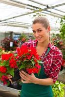 jardinier dans son magasin de fleurs maison verte photo