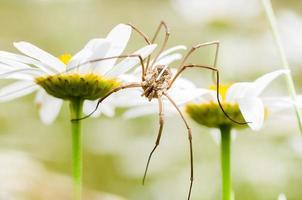 araignée et fleur