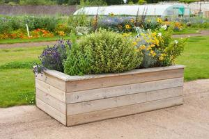fleurs et herbes dans une boîte en bois