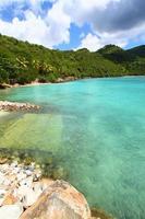 Brewers Baie de Tortola