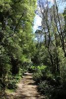 arbres d'eucalyptus photo