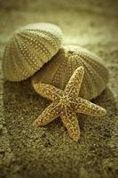 étoile de mer et oursin photo