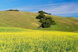Prairie de Californie photo