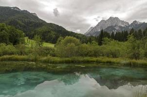 Sava Spring à Zelenci photo