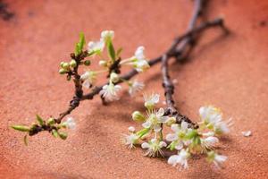 branche de fleur photo