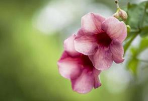 fleur rose sur fond vert naturel flou