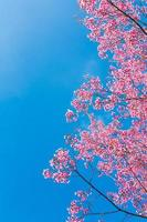 belle fleur rose photo
