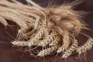 tiges de blé et de seigle photo