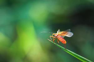 bug en vert photo