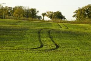 pistes dans le champ vert