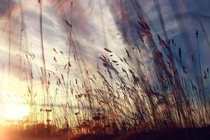 herbe sèche ciel été coucher de soleil photo