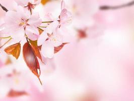 concept de printemps photo