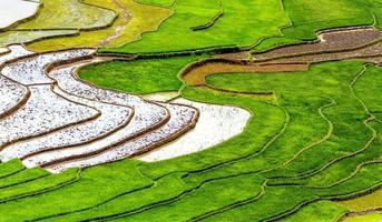 rizière en terrasse