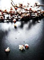 Branche de fleur d'amandier en fleurs sur fond noir