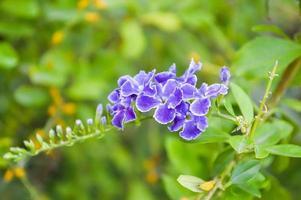 fleur de pigeon violet