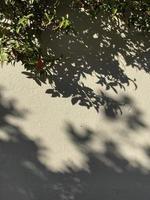 ombres de feuilles sur le mur photo