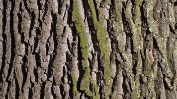 gros plan, de, arbre, écorce