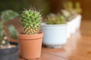 plantes succulentes ou cactus en pot sur planche de bois photo